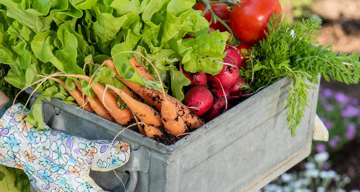 Senate Democrats Push Legislation to Aid Farmers, Bolster Local Agriculture, Develop Markets